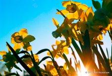 Spring in the Arborteum