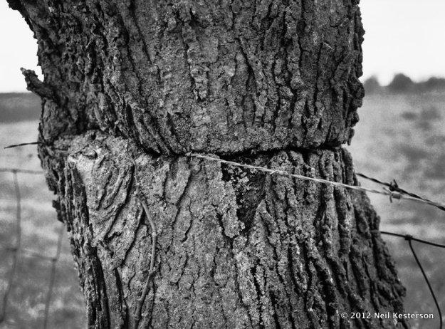 Stangled Tree