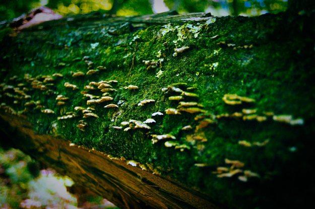 Mushroom-Tree-RRG-2013-0801-OM4-Portra-400-28