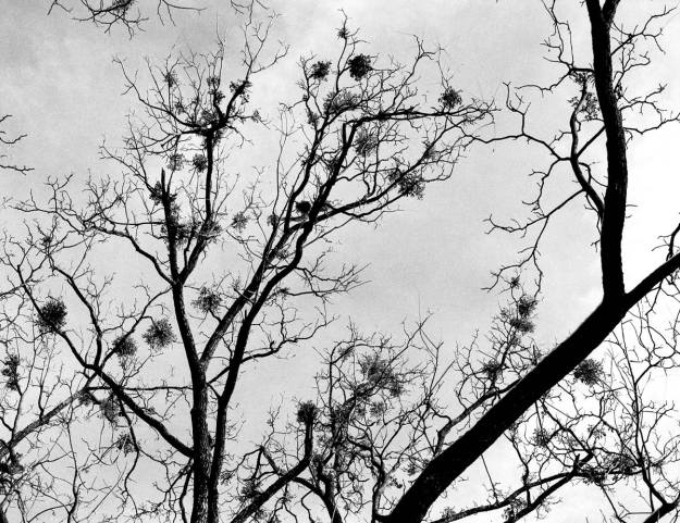 Winter-Tree-LexCem-2013-1117-ETRS-FP4-06