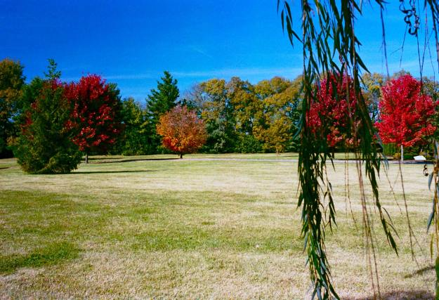 Fall-Field-LexCem-2013-1105-OM4-Portra40008