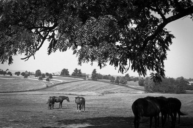 Bluegrass Farm-Winchester Farm-2014-0930-VoigtVitessa-Del100-01.jpg