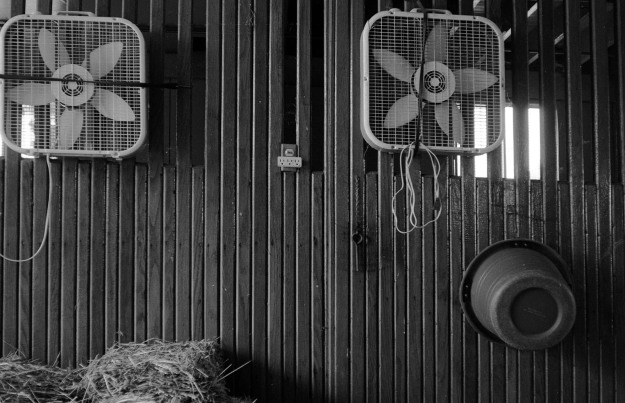 Fans-Winchester Farm-2014-0930 VoigtVitessa Del100-09.jpg
