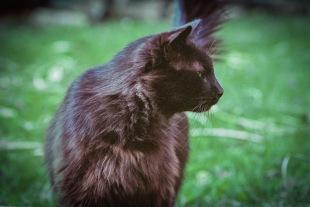 """Blackie"" Canon F-1, Kodak Portra 400"