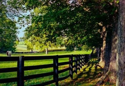 """Painted Horse Farm"" Canon F-1, Kodak Portra 400"